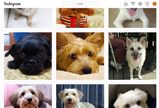 ミックス犬図鑑Instagram