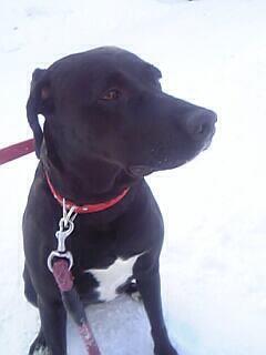 親犬の犬種から検索:大型犬 親犬もミックス犬