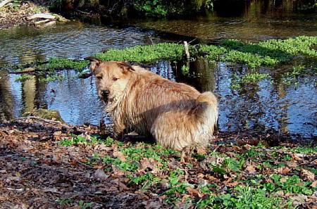 ミックス犬大型犬