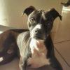 親犬の犬種から検索:中型犬