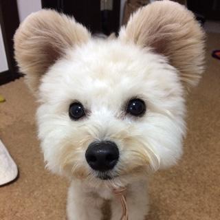 ミックス犬小型