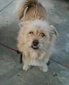 ミックス犬チェロ