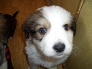 2008年10月ミックス犬 ライアンくん