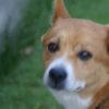 2010年10月ミックス犬 パムセくん