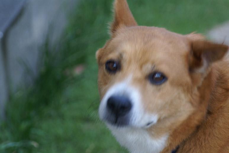 ミックス犬パムセ