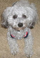【2005年3月のミックス犬】に選ばれました☆くぅちゃん