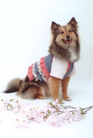 柴犬ミックス犬ヒメ