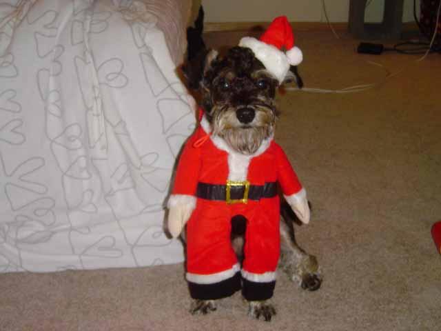 12月ミックス犬ジェントルマン