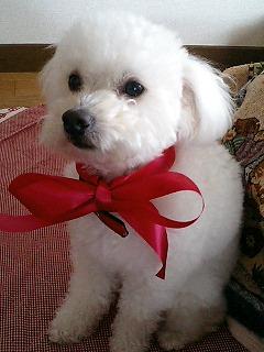 3月ミックス犬ルパン