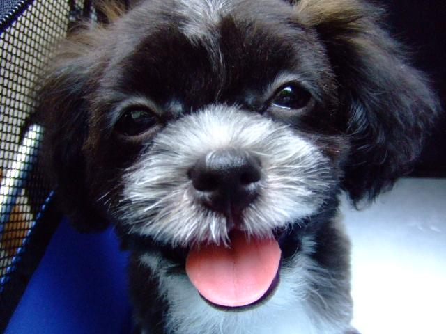 11月のミックス犬に選ばれたみんなのお写真まとめ
