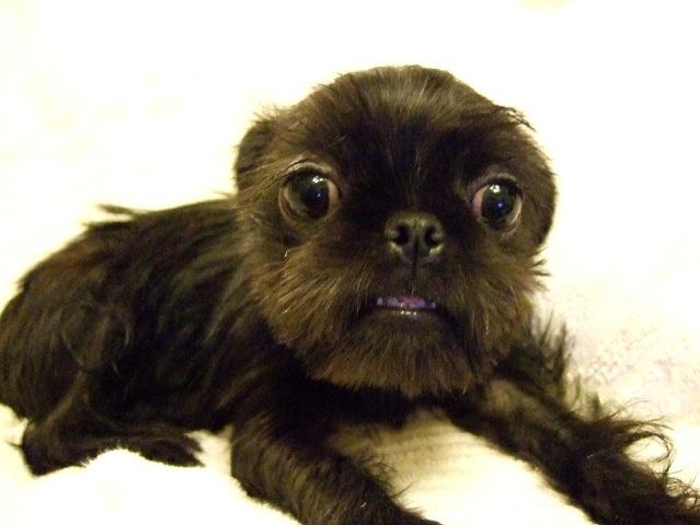 12月ミックス犬トイフィー
