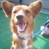 【2009年3月のミックス犬】レオンくん
