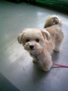 スノークミックス犬
