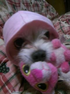 ミックス犬モコ