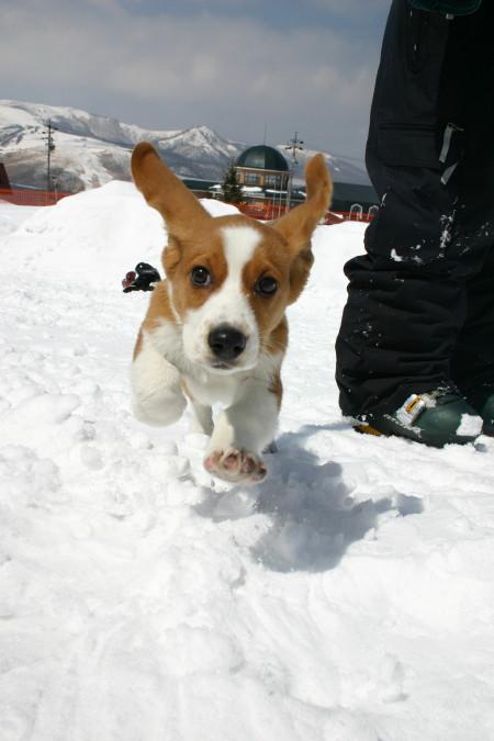 1月ミックス犬ヤマト