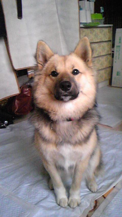 1月ミックス犬ちび