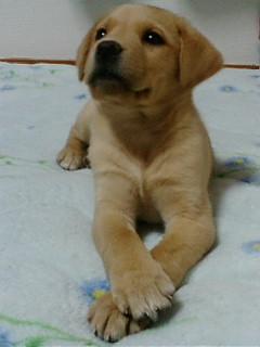 2月ミックス犬ジェリー