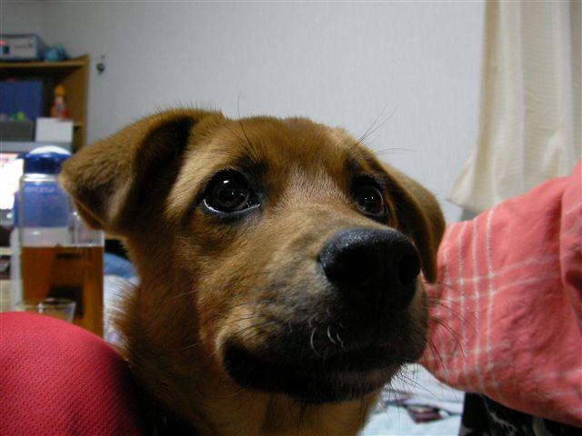 3月ミックス犬トマト