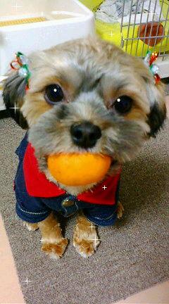 ミックス犬アムロ