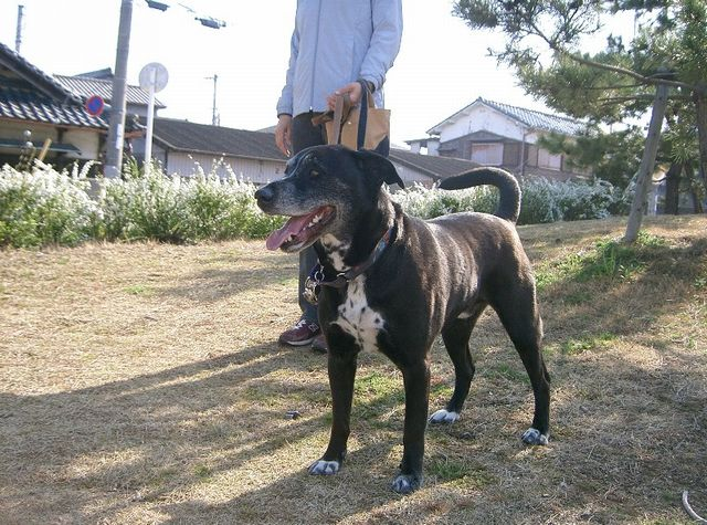 1月ミックス犬タロー
