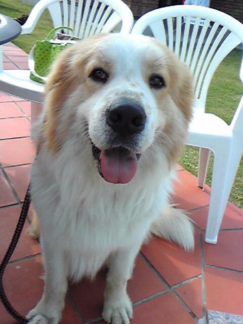 2月ミックス犬ターボ