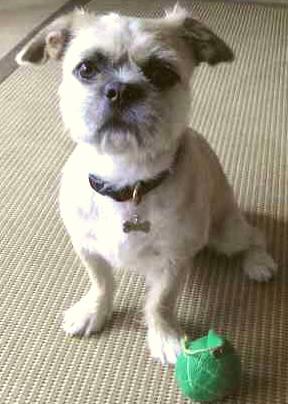 ミックス犬モモ