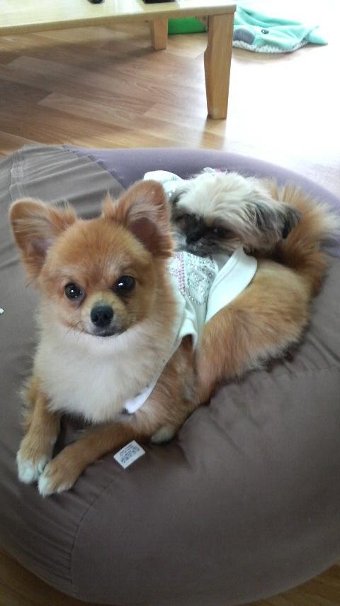 3月ミックス犬ミルモ