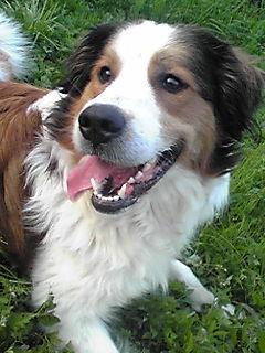 2月ミックス犬ビッキー