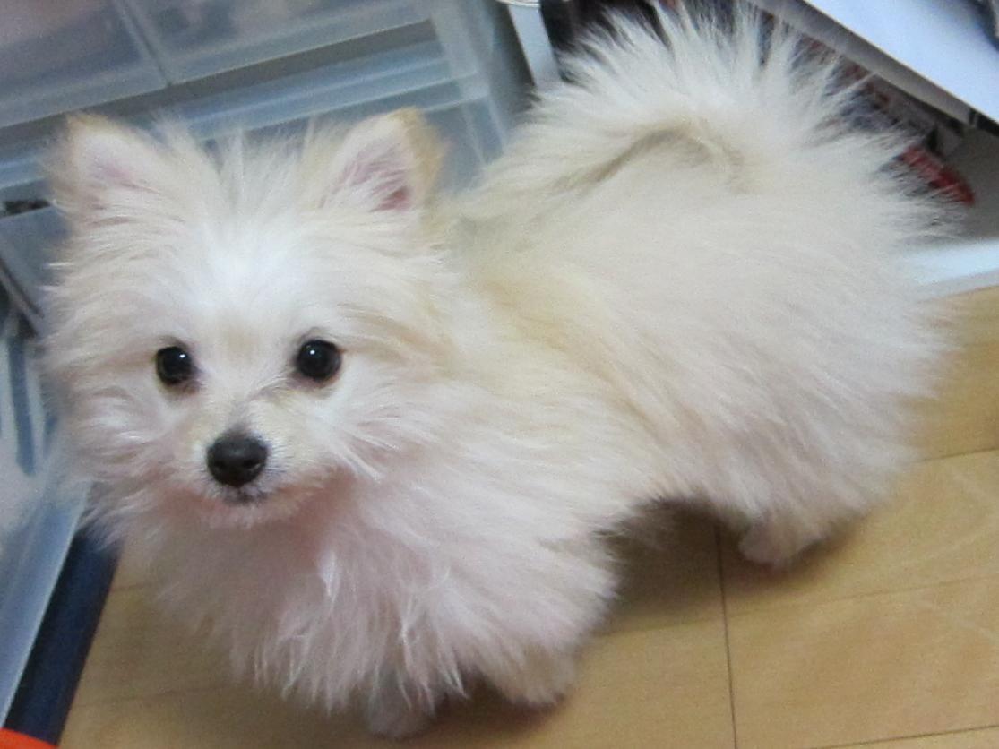 ミックス犬ぱん