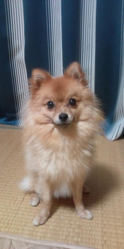 ミックス犬コロン