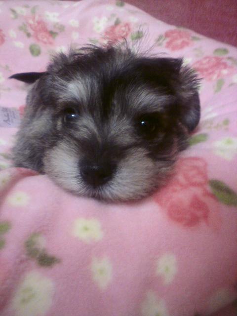 ミックス犬ニノ