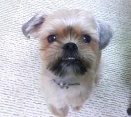 ミックス犬サウザー