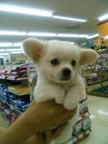 1月ミックス犬太郎