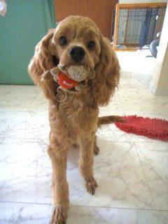 アメコカミックス犬チャッピー