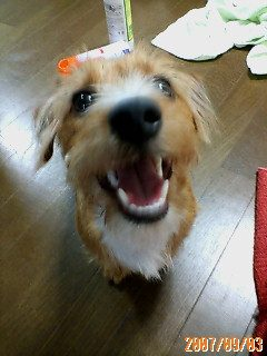 ミックス犬Princessちゃん
