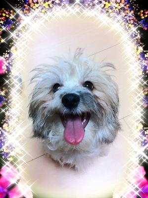 ミックス犬レオン