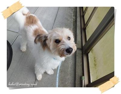 2月のミックス犬ウッディ