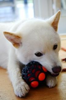 ミックス犬小太郎