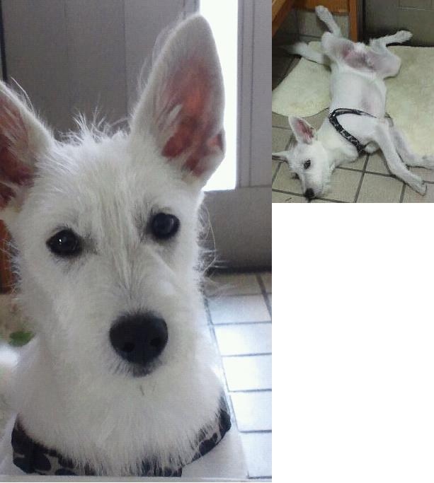 ミックス犬エンディー