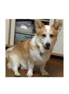 ミックス犬リンダ