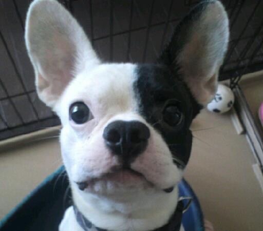 ミックス犬バジル