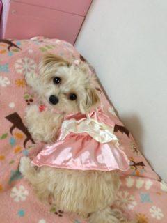 ミックス犬Reiちゃん