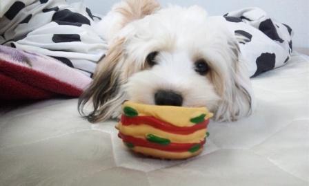 ミックス犬ピーチ
