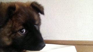 4月お誕生日のミックス犬仲間まとめpart3