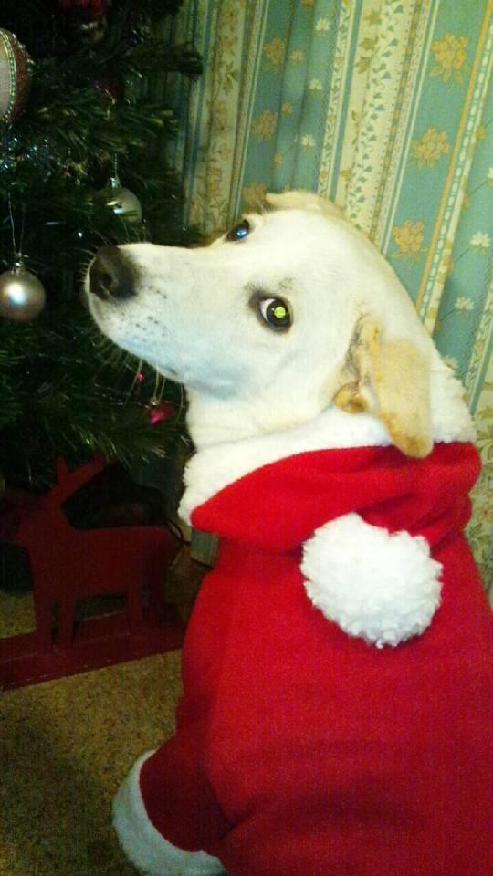 ミックス犬キララ