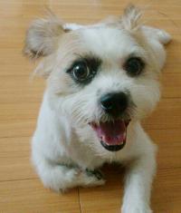 ミックス犬爛丸(らんまる)