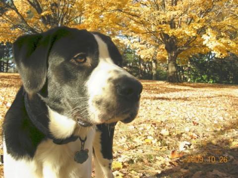 ミックス犬マーフィー