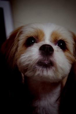ミックス犬美ら
