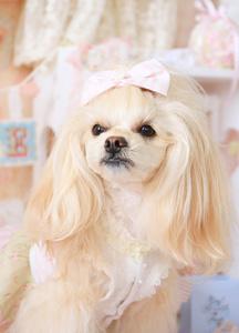 ミックス犬キラ