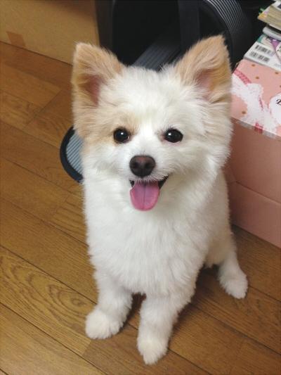ミックス犬天晴(あっぱれ)